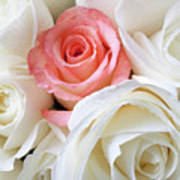 Pink Rose Among White Roses Poster by Garry Gay