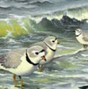 Piping Plovers At The Shore Poster by Tara Milliken