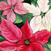 Poinsettia Pastel Poster by Nancy Mueller