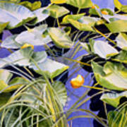 Pond Lilies Poster by Sharon Freeman