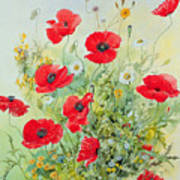 Poppies And Mayweed Poster by John Gubbins
