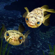 Porcupine Puffer  Poster by Thanh Thuy Nguyen