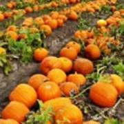 Pumpkin Patch Poster by Carol Groenen