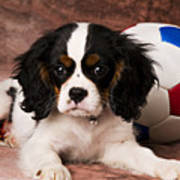 Puppy With Ball Poster by Garry Gay