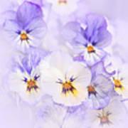 Purple Pansies Poster by Elena Elisseeva
