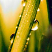 Raindrops On A Blade Of Grass Poster by Mariola Bitner