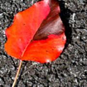 Red Leaf On Asphalt Poster by Douglas Barnett