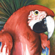 Red Parrot Poster by Anthony Burks Sr