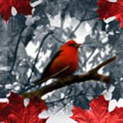 Red Wild Bird Poster by Debra     Vatalaro