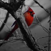 Redbird Poster by Shawn Wood