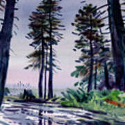 Redwood Reflections   Poster by Donald Maier