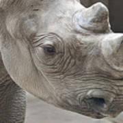 Rhinoceros Poster by Tom Mc Nemar