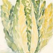 Romaine Poster by Linda Bourie