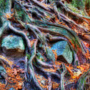 Roots And Rocks Poster by Naman Imagery