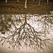 Roots Poster by Derek Selander