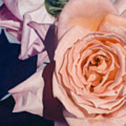 Rose Splendour Poster by Kerryn Madsen-Pietsch