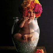 Roses Poster by Anne Geddes