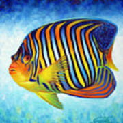 Royal Queen Angelfish Poster by Nancy Tilles