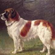 Saint Bernard Poster by Heinrich Sperling