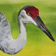 Sandhill Crane Poster by D Turner
