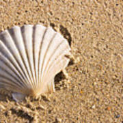 Sandy Shell Poster by Jorgo Photography - Wall Art Gallery