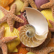 Sea Shells And Starfish Poster by Garry Gay