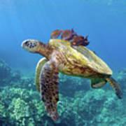 Sea Turtle Underwater Poster by M.M. Sweet