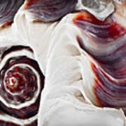 Seashell Detail Poster by Elena Elisseeva