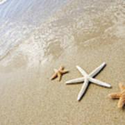 Seastars On Beach Poster by Mary Van de Ven - Printscapes