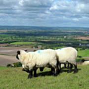 Sheep At Westbury Tor Poster by Kurt Van Wagner