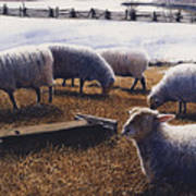 Sheepish Poster by Denny Bond