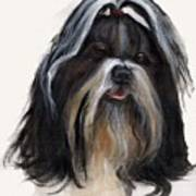Shih Tzu Poster by Jimmie Trotter