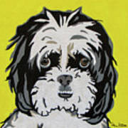 Shih Tzu Poster by Slade Roberts