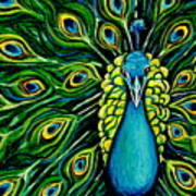 Shimmering Feathers Of A Peacock Poster by Elizabeth Robinette Tyndall