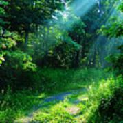 Shining Light Poster by Thomas R Fletcher