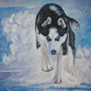 Siberian Husky Run Poster by Lee Ann Shepard