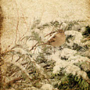 Sparrow In Winter I - Textured Poster by Angie Tirado