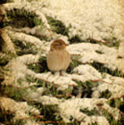 Sparrow In Winter II - Textured Poster by Angie Tirado