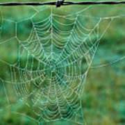 Spider Web In The Springtime Poster by Douglas Barnett