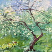 Spring Plum Poster by Elizabeth Carr