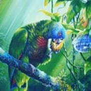St. Lucia Parrot And Wild Passionfruit Poster by Christopher Cox