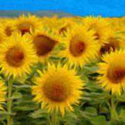 Sunflowers In The Field Poster by Jeff Kolker