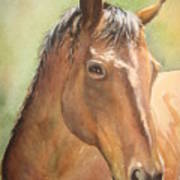 Sunlit Horse Poster by Patricia Pushaw