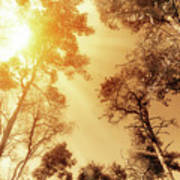 Sunlit Tree Tops Poster by Wim Lanclus