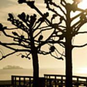 Sunrise Trees Poster by Tom Rickborn