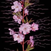 Sweet Smell Of Spring Poster by Debra     Vatalaro