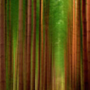Tall Trees Poster by Svetlana Sewell