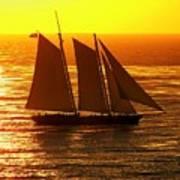Tangerine Sails Poster by Karen Wiles