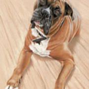 Taz My Best Friend Poster by Vanda Luddy