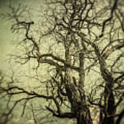 The Haunted Tree Poster by Lisa Russo